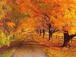 Прогулки с детьми осенью